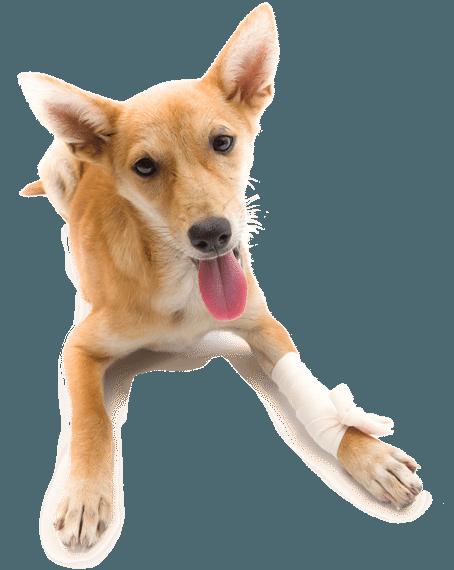 Pet Emergency in Carthage