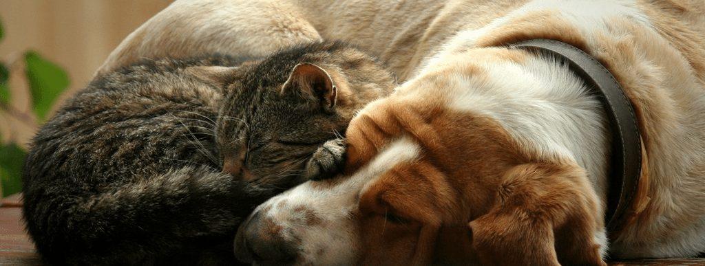 cat-dog5