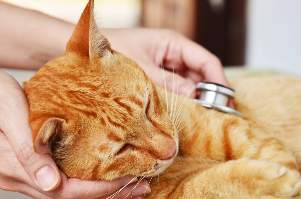 vinegar to remove cat urine from clothes