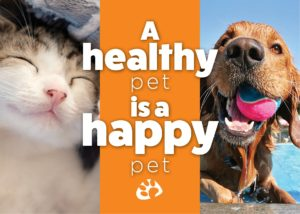 Regular Exams are a vital part of keeping your pet happy, healthy and safe.